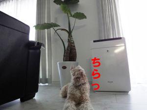 Dsc02207